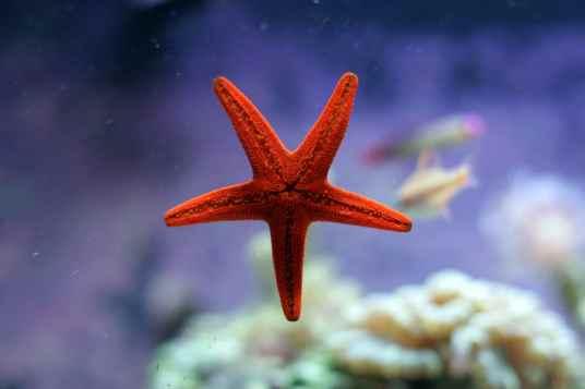 starfish morgue