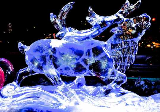 reindeer ice