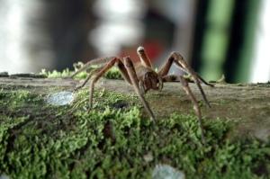 big-spider-1314652